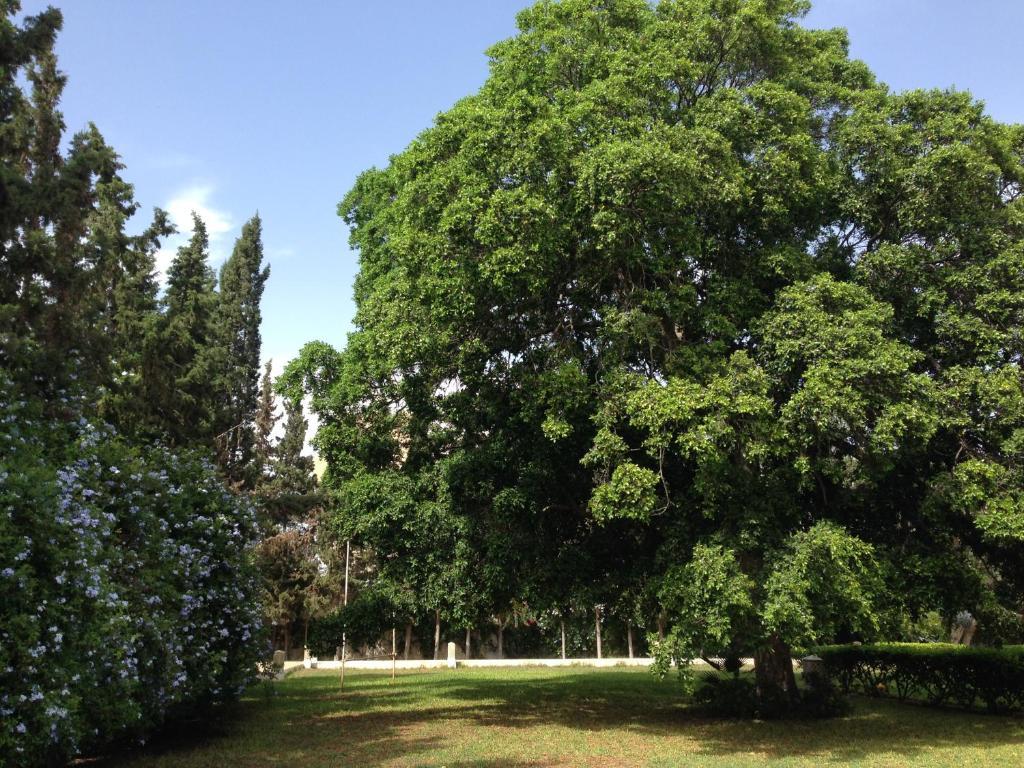 Хостел Les Palmiers Centre de Vacances, Хаммамет