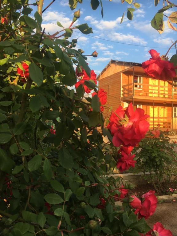 Гостевой дом Сияние солнца