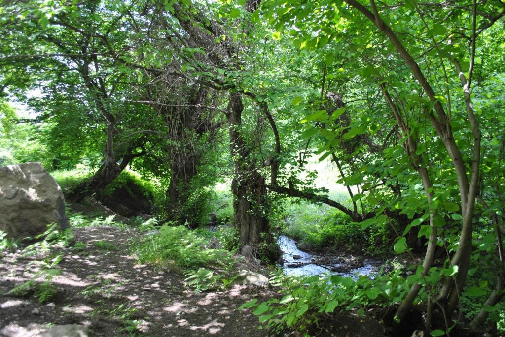 Лесной парк Талистан