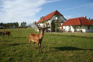 Deer at the Ferienhof Tiergarten hotel