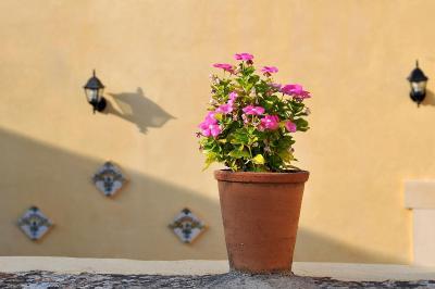Il Giardino del Barocco - Noto - Foto 33