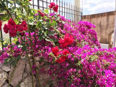 B&B Terre di Sicilia - Giardini Naxos - Foto 22
