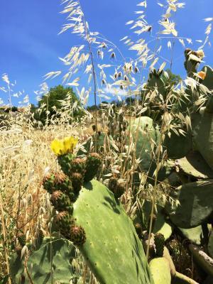 B&B Terre di Sicilia - Giardini Naxos - Foto 20