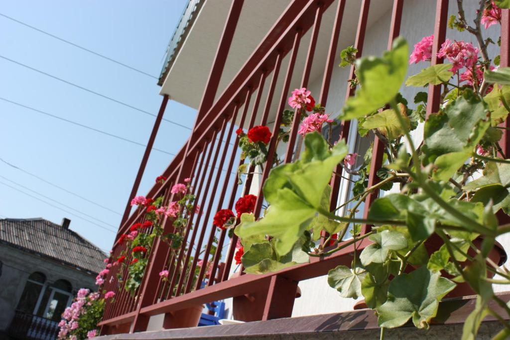 Гостевой дом У Риммы, Цандрипш, Абхазия