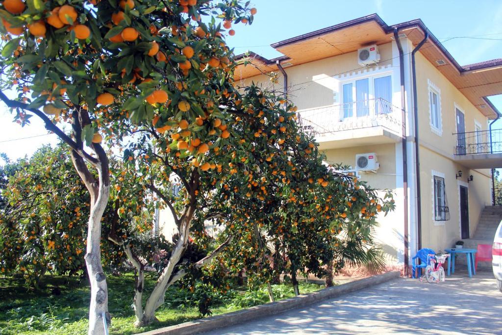 Отель Дивный Сад, Новый Афон, Абхазия