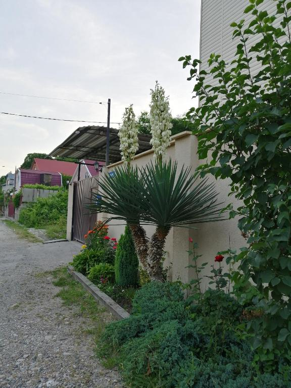 Гостевой дом Ореховый 13, Пляхо