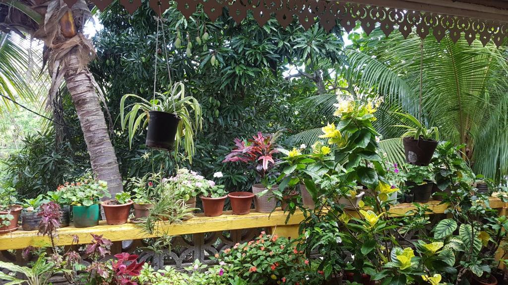 Chez May, Порт-Матюрен, Маврикий