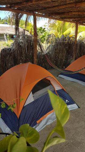 Camping Coconut